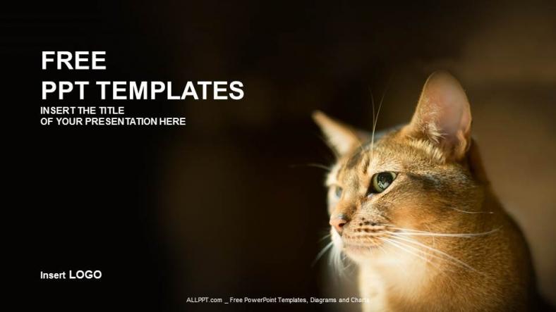 cat powerpoint templates