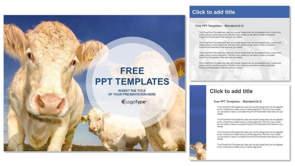 cows in the field powerpoint templates