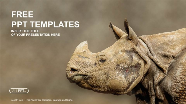 rhino  rhinoceros head shot powerpoint templates