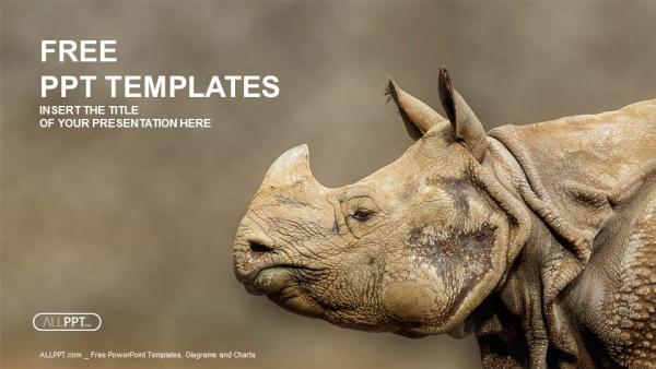 rhino  rhinoceros head shot powerpoint templates